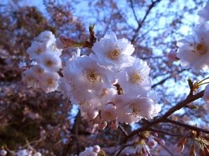 Cara Belajar Bahasa Jepang Untuk Pemula