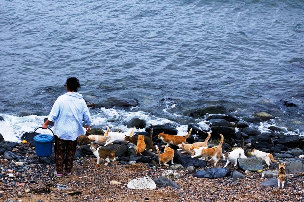 foto foto menakjubkan dari pulau Surga Kucing di Jepang - Foto Kucing di Fukuoka Jepang 01