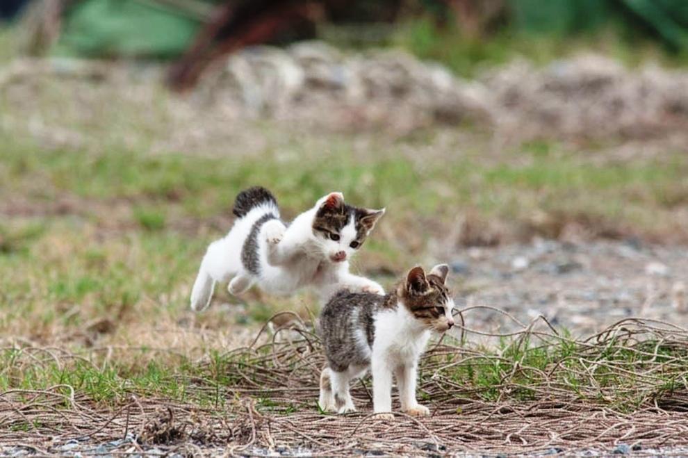 foto foto menakjubkan dari pulau Surga Kucing di Jepang - Foto Kucing di Fukuoka Jepang 02