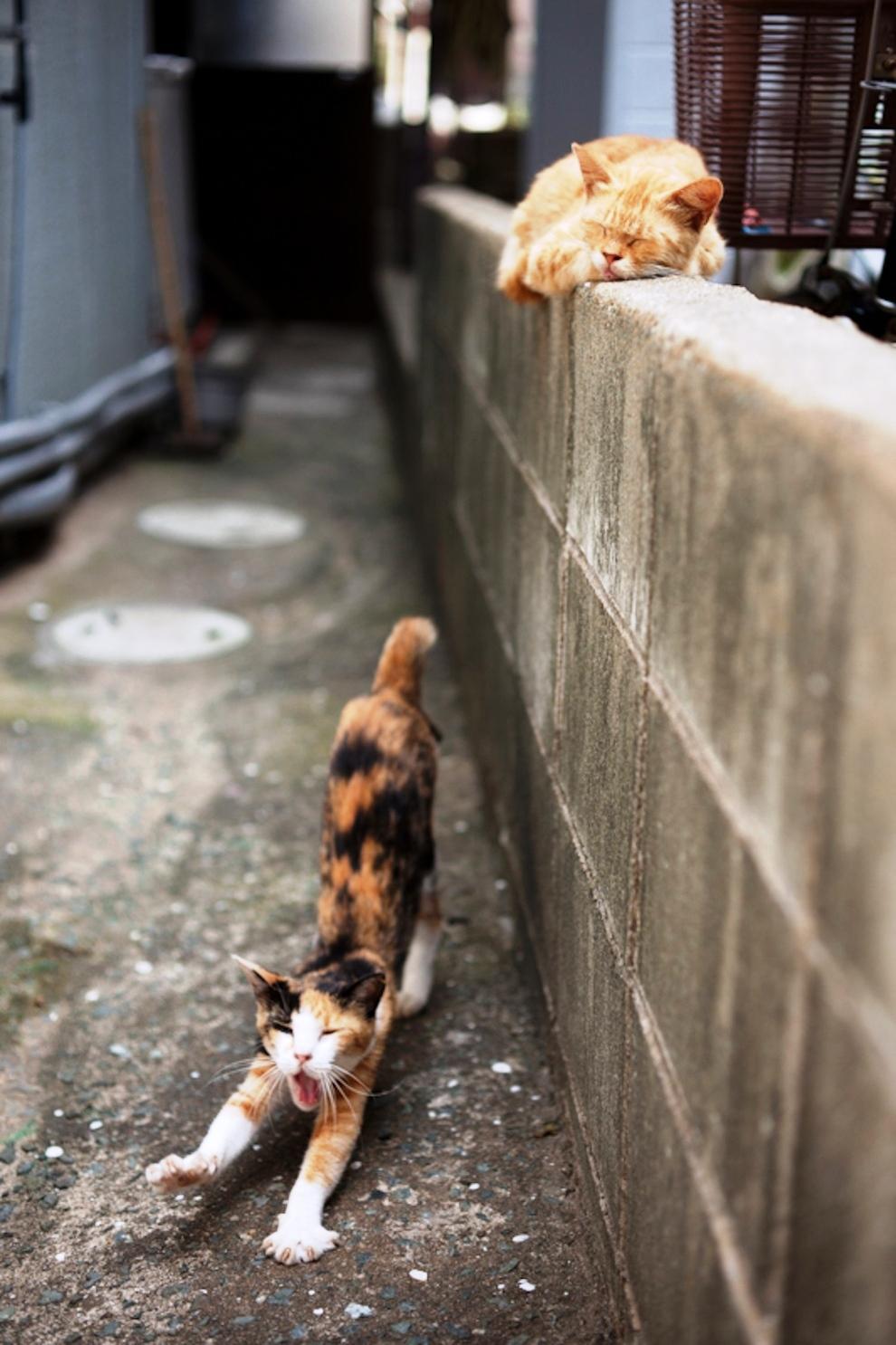 foto foto menakjubkan dari pulau Surga Kucing di Jepang - Foto Kucing di Fukuoka Jepang 05