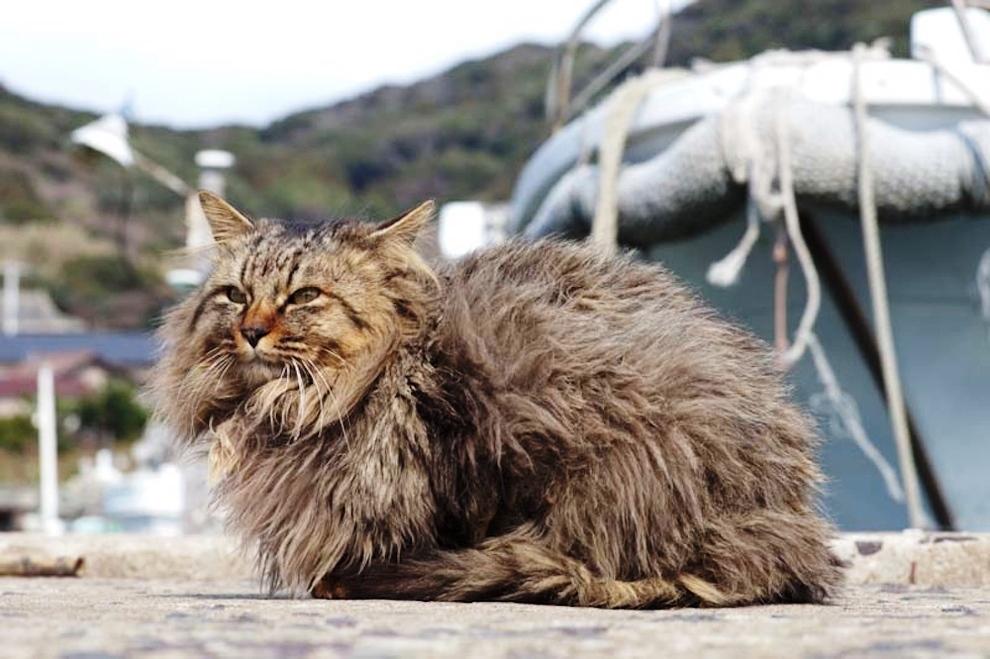 foto foto menakjubkan dari pulau Surga Kucing di Jepang - Foto Kucing di Fukuoka Jepang 14