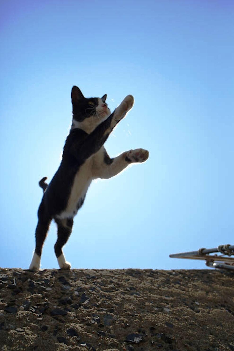 foto foto menakjubkan dari pulau Surga Kucing di Jepang - Foto Kucing di Fukuoka Jepang 16