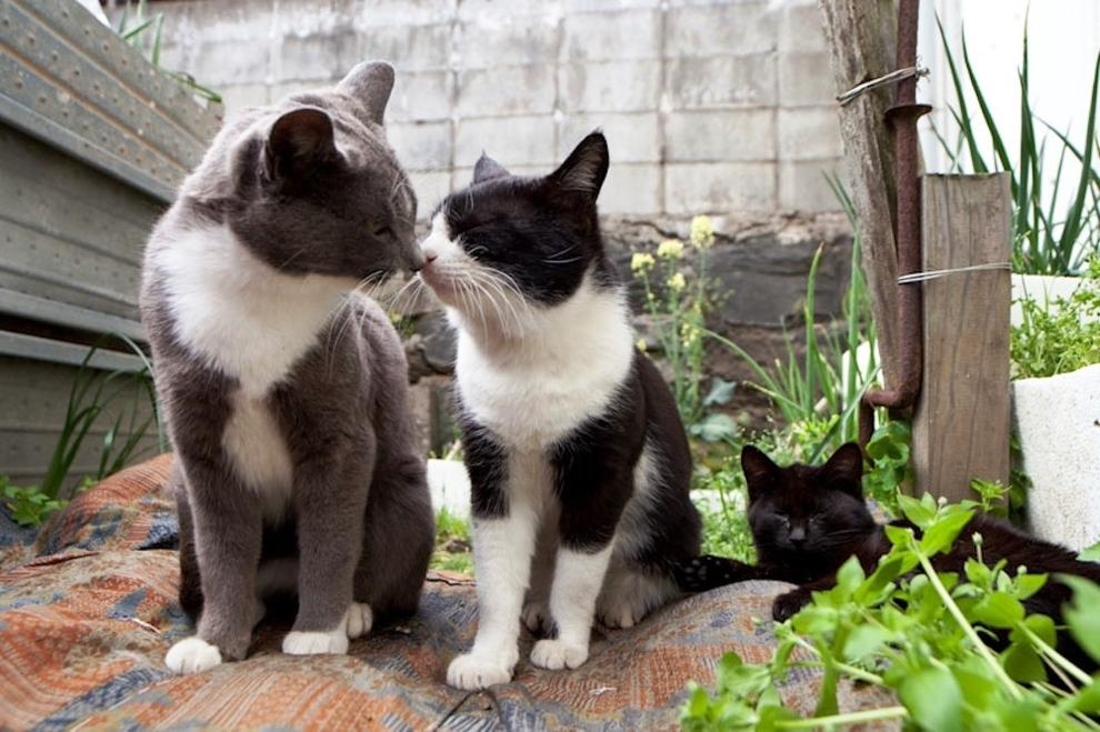 foto foto menakjubkan dari pulau Surga Kucing di Jepang - Foto Kucing di Fukuoka Jepang 24