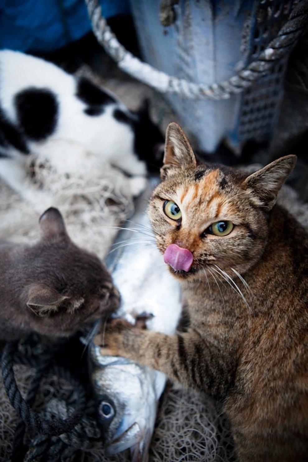 foto foto menakjubkan dari pulau Surga Kucing di Jepang - Foto Kucing di Fukuoka Jepang 28