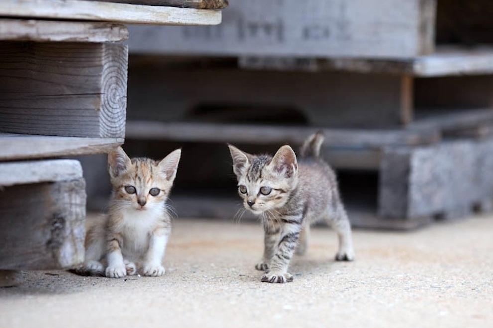 foto foto menakjubkan dari pulau Surga Kucing di Jepang - Foto Kucing di Fukuoka Jepang 32