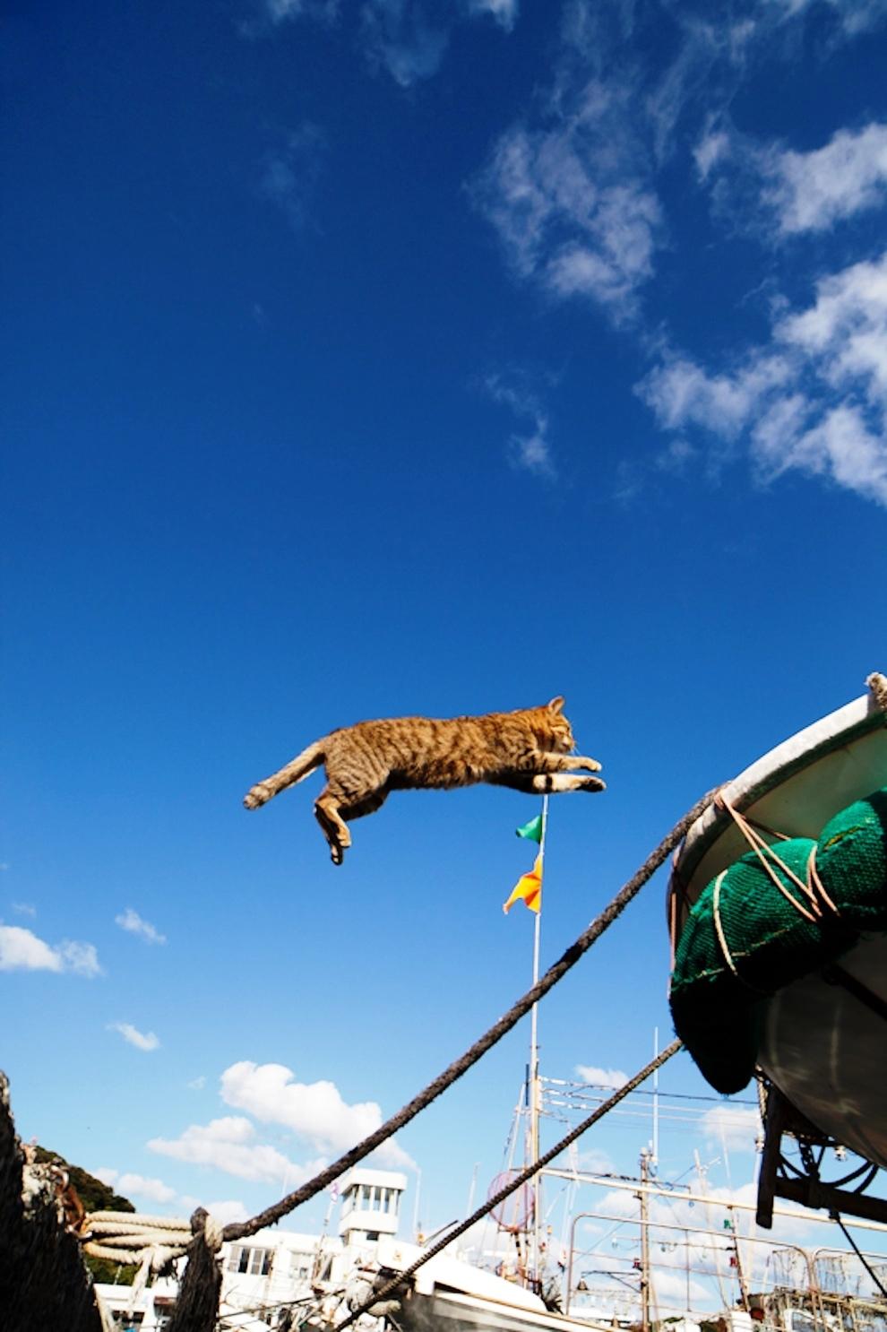 foto foto menakjubkan dari pulau Surga Kucing di Jepang - Foto Kucing di Fukuoka Jepang 34