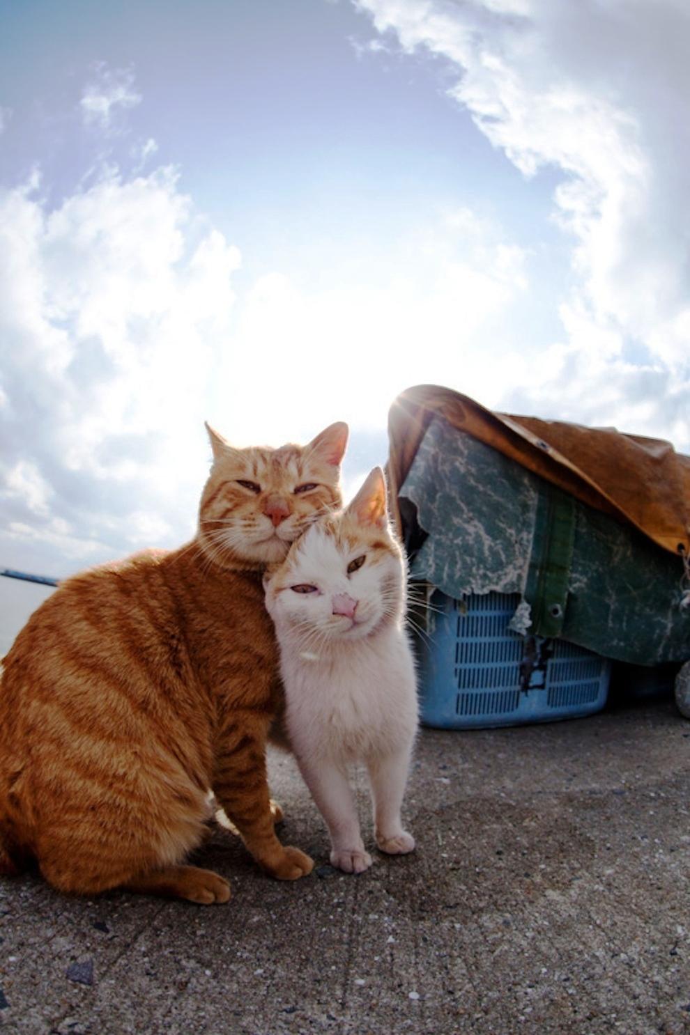 Foto Kucing di Fukuoka Jepang 37