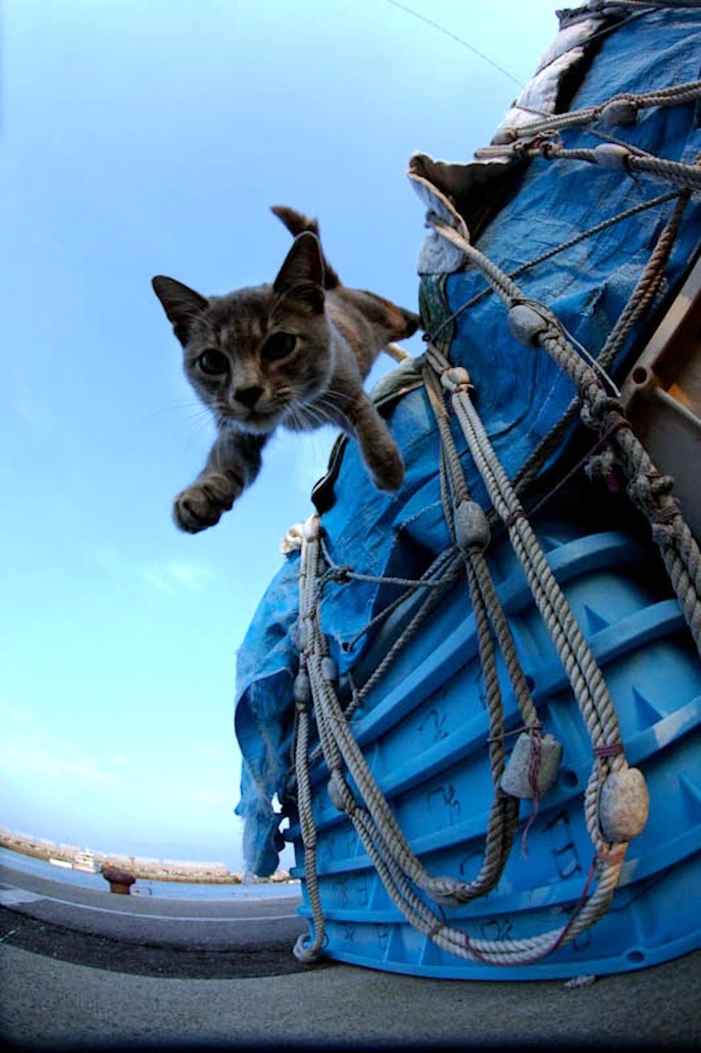 foto foto menakjubkan dari pulau Surga Kucing di Jepang - Foto Kucing di Fukuoka Jepang 38