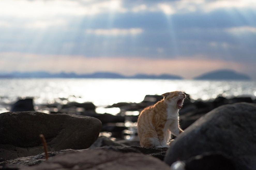 foto foto menakjubkan dari pulau Surga Kucing di Jepang - Foto Kucing di Fukuoka Jepang 41