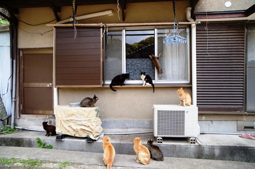 foto foto menakjubkan dari pulau Surga Kucing di Jepang - Foto Kucing di Fukuoka Jepang 43