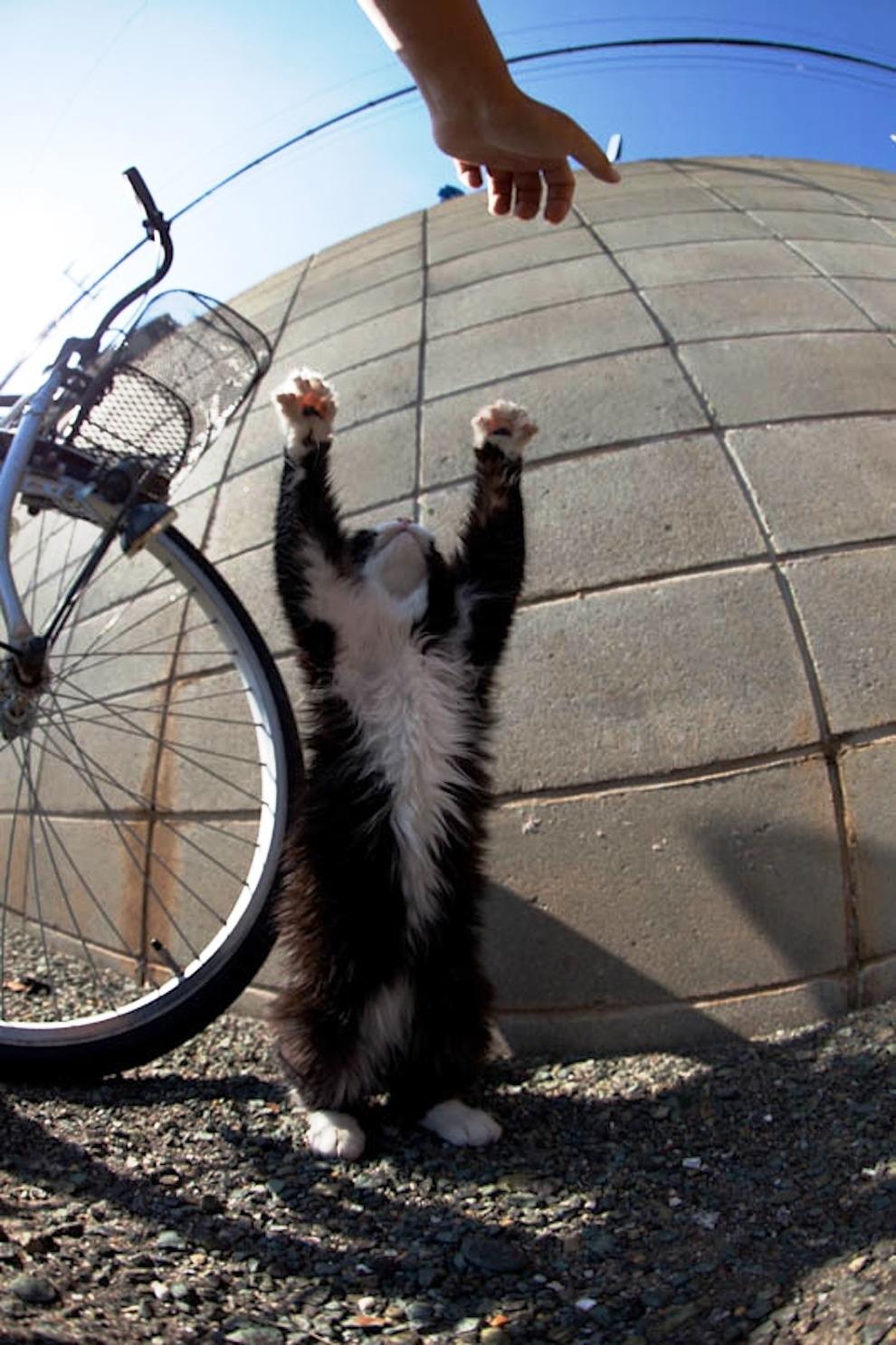 foto foto menakjubkan dari pulau Surga Kucing di Jepang - Foto Kucing di Fukuoka Jepang 48