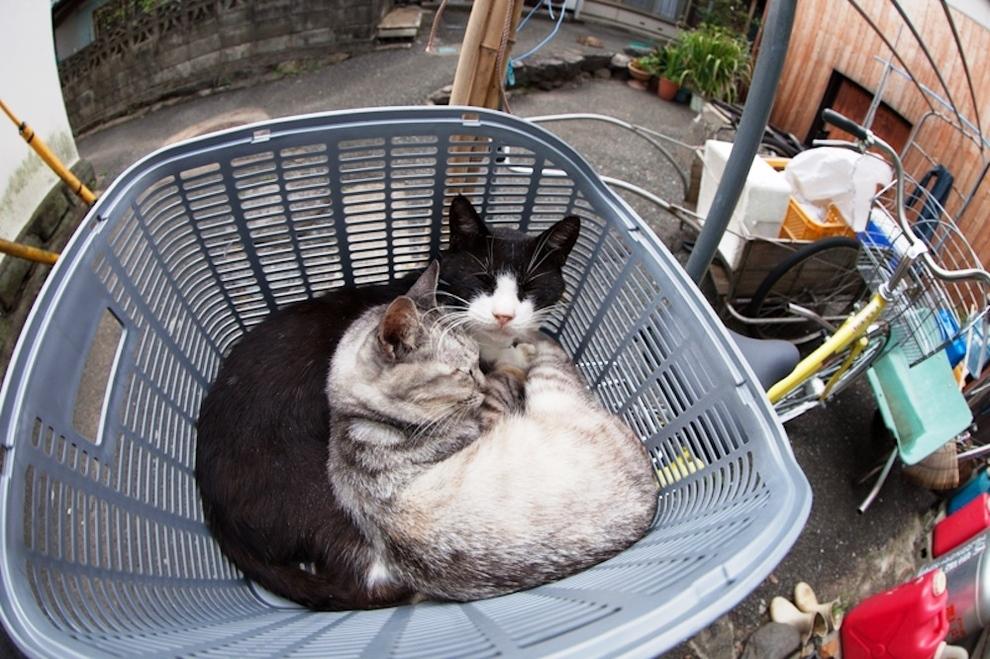 foto foto menakjubkan dari pulau Surga Kucing di Jepang - Foto Kucing di Fukuoka Jepang 50