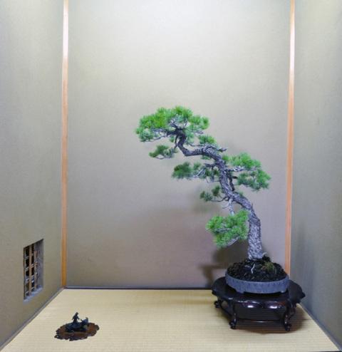 Museum Shunkaen Milik Sang Master Bonsai 21