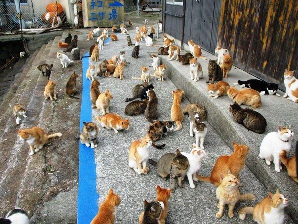 Pulau Kucing di Jepang ini Meminta Bantuan Makanan