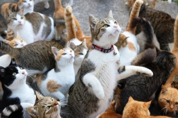 Pulau Kucing di Jepang ini Meminta Bantuan Makanan, Apa yang Didapatkan?