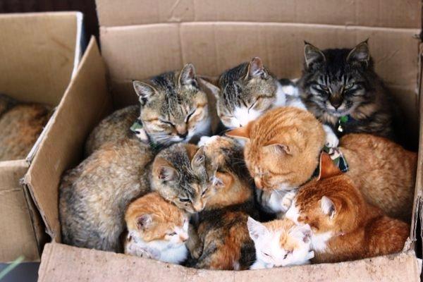 pulau kucing Jepang 10