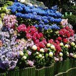 Warna Penting di Jepang: Ada 5 Jenis yang Paling Mempengaruhi Budaya