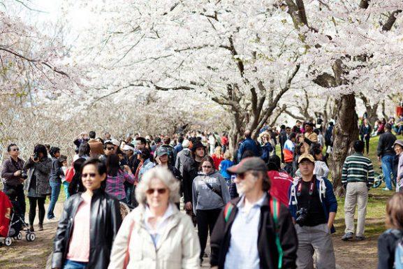 Populasi Jepang Terbesar di Kanada